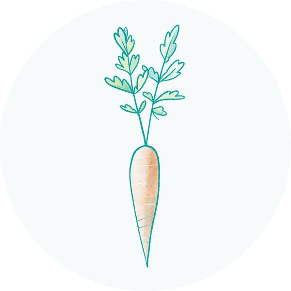 Carrot Root Extract