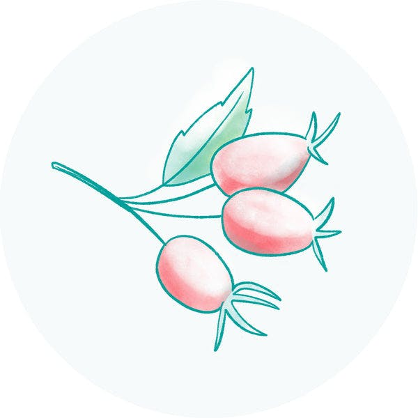 Organic Rosehip Seed Oil