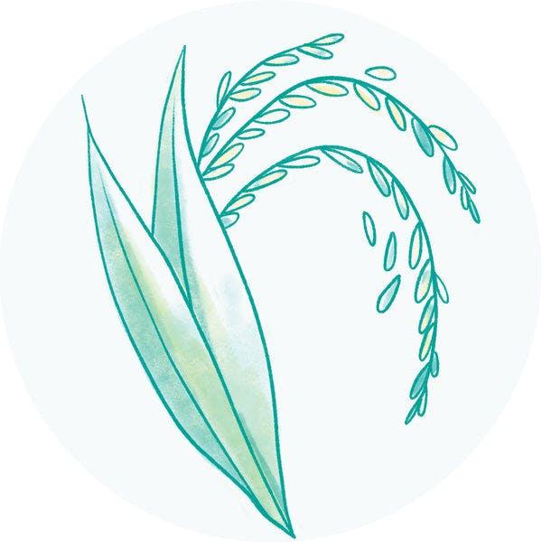 Oryza Sativa (Rice) Extract