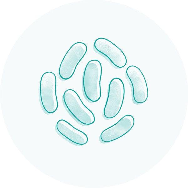 Probiotic (Lactobacillus Ferment)